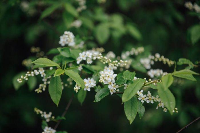 Tarzāna parki Siguldā, Jūrmalā un Daugavpilī maijā būs atvērti nedēļas nogalēs